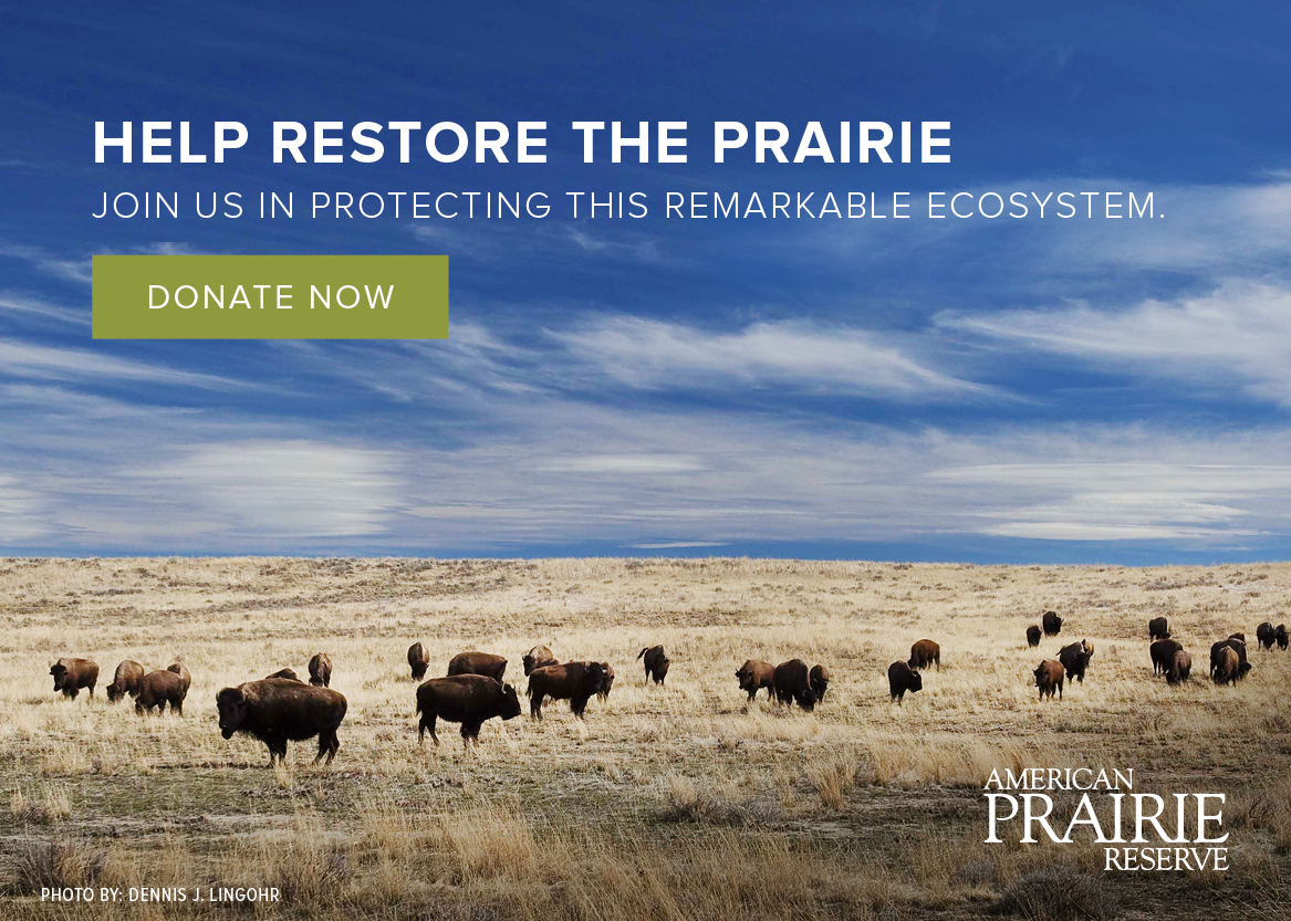 Help Restore the Prairie - Donate to American Prairie Reserve
