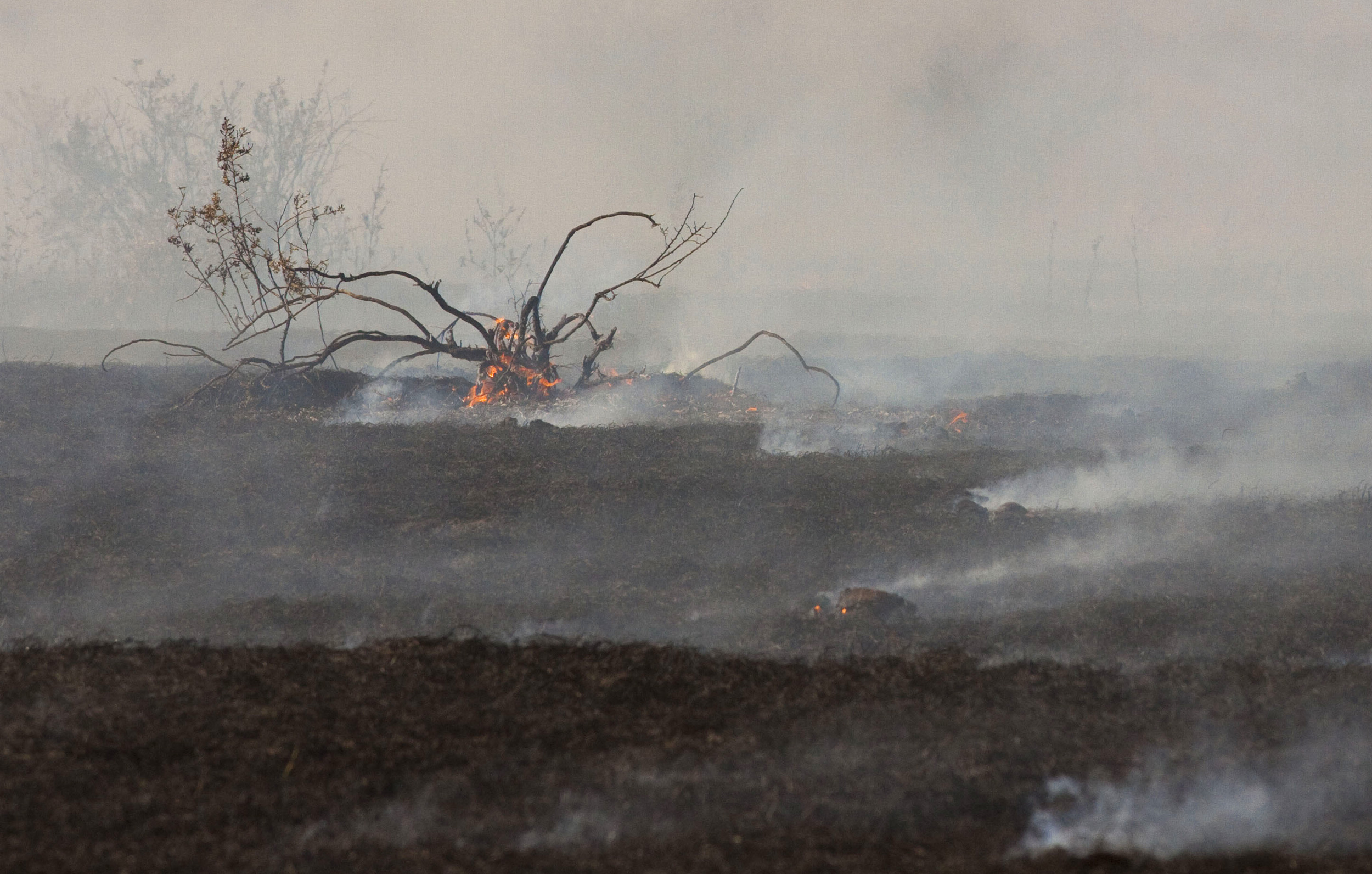 Photo of prescribed fire burn out by Dennis Lingohr